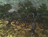 Gogh, Vincent van - The Olive Grove